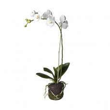 Small orchid based on land